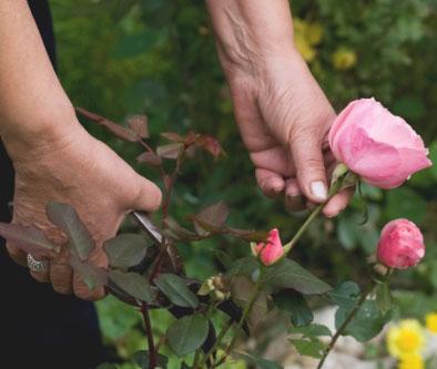 Jak przycinać kwiaty do wazonu