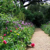 Jak urządzić zaciemniony ogród