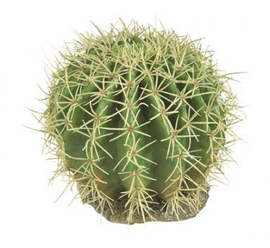 Jak dbać o kaktusy