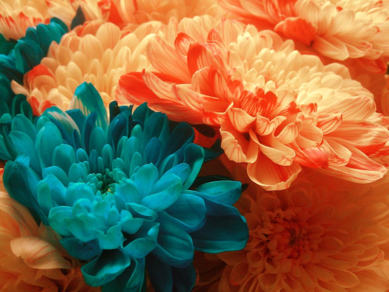 Jak zafarbować wysuszone kwiaty