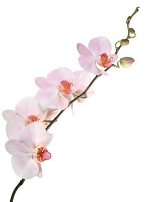 Jak hodować orchideę