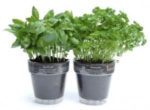 Jak uprawiać zioła w domu