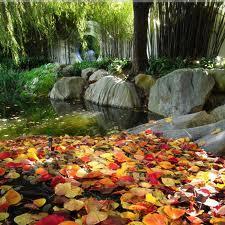 Jak ozdobić ogród jesienią
