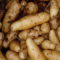 Jak rozpalić ogień z ziemniaka