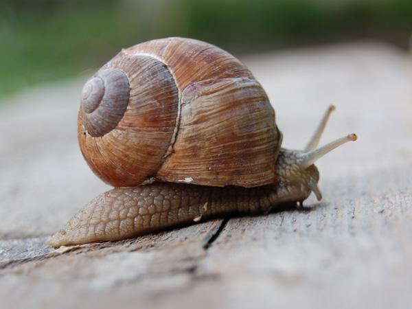 Jak zwalczać ślimaki