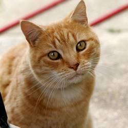 Jak pozbyć się przykrego zapachu kociego moczu