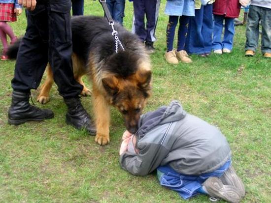 Jak postępować w razie ataku psa