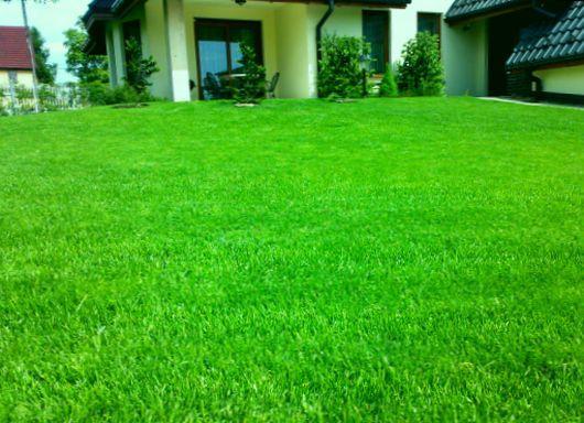 Jak nawozić trawnik