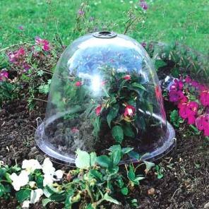 Jak chronić siewki i sadzonki