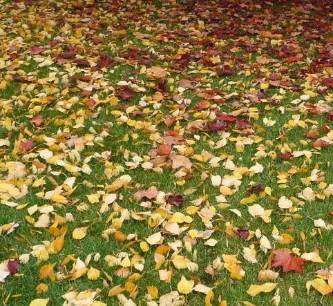 Jak pielęgnować trawnik w okresie jesiennym