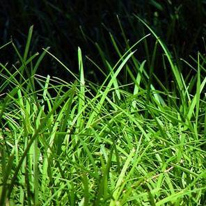 Jak pielęgnować trawnik podczas wiosennych miesięcy