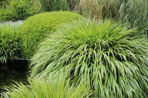 Jak dbać o trawę ozdobną