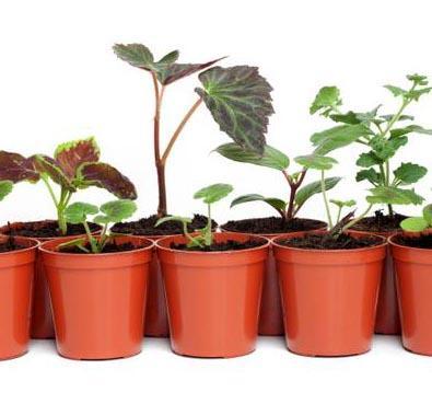 Jak rozmnaża się rośliny przez podział