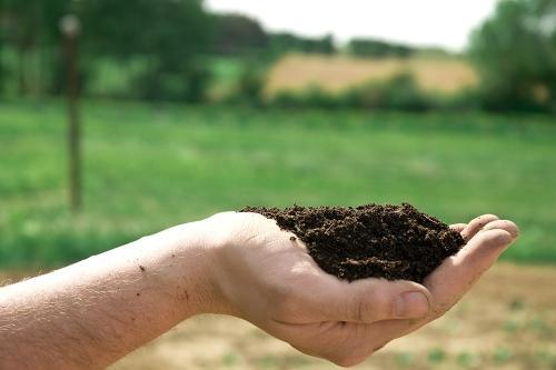 Jak zmierzyć i zmienić odczyn pH gleby