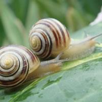 Jak zwalczyć ślimaki
