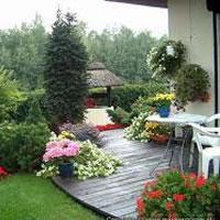Jak rozmieścić rośliny w ogrodzie?