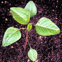 Jak wybrać światłolubne rośliny ogrodowe