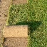Jak drenować trawnik