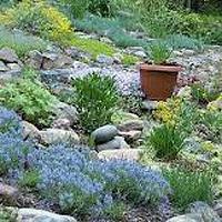 Jak dbać o ogródek skalny?