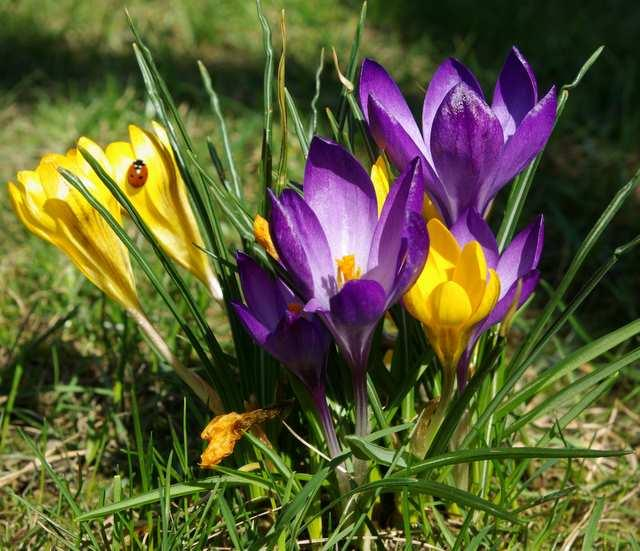 Jak sadzić i pielęgnować wiosenne kwiaty