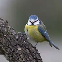 Jak zwabić ptaki do ogrodu