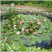 Jak wybudować oczko wodne w ogrodzie