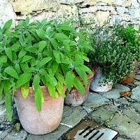 Jak uprawiać zioła w ogrodzie