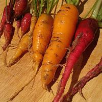 Jak przechowywać warzywa z ogrodu