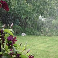 Jak wykorzystać deszczówkę