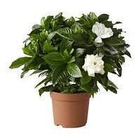 Jak dbać o rośliny doniczkowe podczas zimy