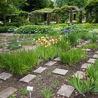 Jak ożywić ogród