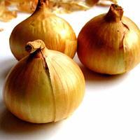 Jak uprawić cebulę