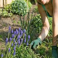 Co robić w ogrodzie w kwietniu