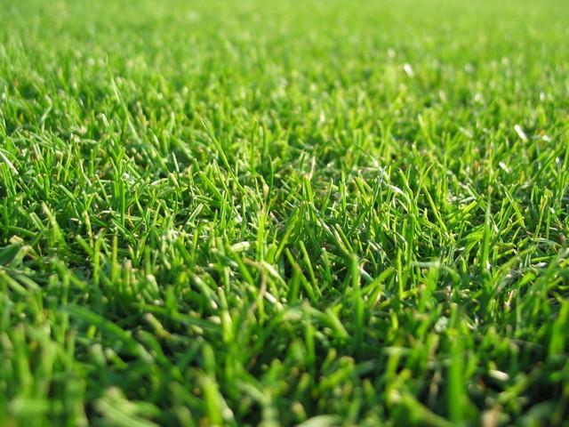 Co posadzić na trawniku