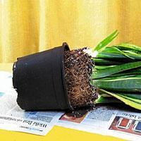 Jak przesadzać kwiaty doniczkowe