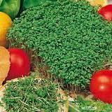 Jak sadzić gorczycę i rzeżuchę