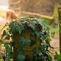 Jak rozmnażać rośliny doniczkowe z odkładów