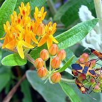 Jak pozbyć się robaków z roślin domowych