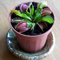 Jak leczyć choroby roślin doniczkowych