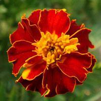 Jak ustawić rośliny domowe, aby ładnie kwitły