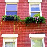 Jak zrobić, aby rośliny nie zmarniały podczas twojej nieobecności