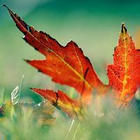 Jak zrobić, by liście roślin domowych lśniły