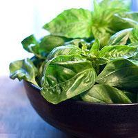 Jak hodować zioła