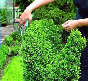 Jak przycinać drzewa i krzewy