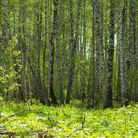 Jak hodować krzewy liściaste